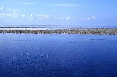 Récif affleurant, Maldives 1992