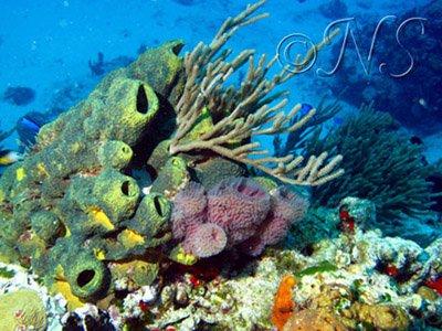 Ambiance sous-marine Mexique