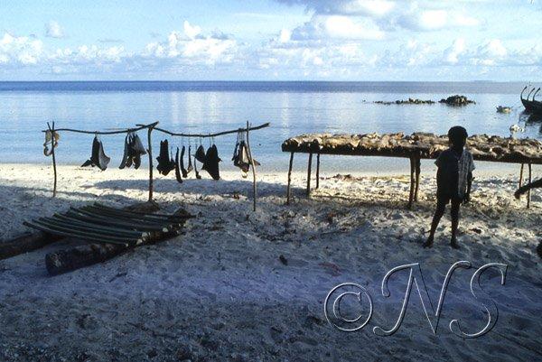 Séchage des ailerons de requins Maldives 1987