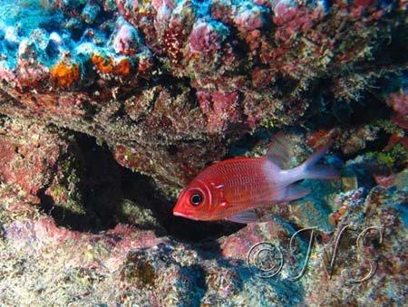 R sultats de recherche poisson pincette search for poisson for Poisson rouge gros yeux
