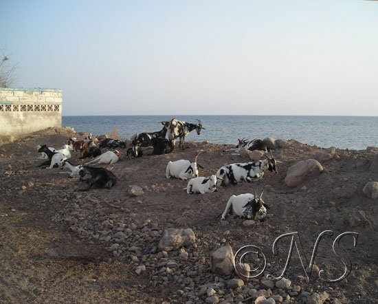 Ville de Tadjoura  Djibouti