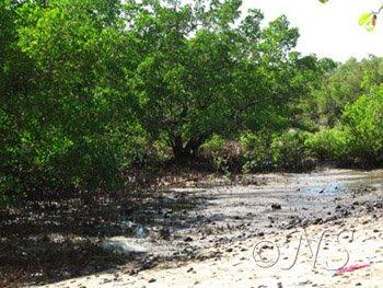 Mangrove Nosy Bé