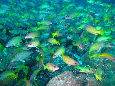 Banc de poissons Nosy Bé