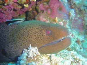 blog-bnettoyage-300x225 poissons nettoyeurs dans BIOLOGIE MARINE