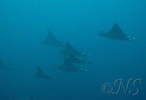 blog-passes-3-300x206 passe dans PLONGEES EN OCEAN INDIEN