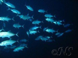 blog-passes-4-300x225 récif corallien