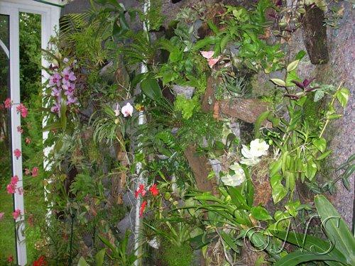 mur-de-plantes-005 broméliacées dans MON MUR DE PLANTES
