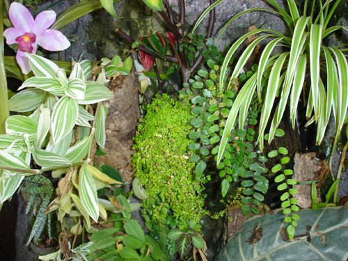 mur-de-plantes17
