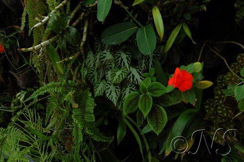 mur-de-plantes_0777 fougères