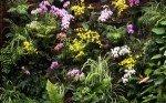 Mur de plantes_serre papillons VANNES