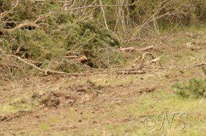 NS Puiselet le marais repérage avril (8)