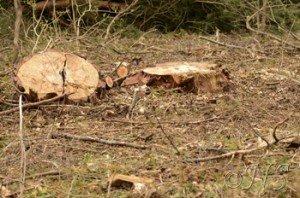 NS Puiselet le marais repérage avril (9)
