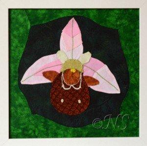 NS Ophrys apifera