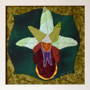 NS Ophrys aranifera