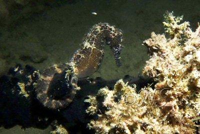 blog Hippocampe Philippines (6)
