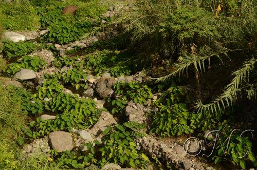 Cap vert blog (28)