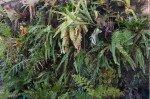 FB Plantes véranda février 2021 (8 sur 10) - Copie